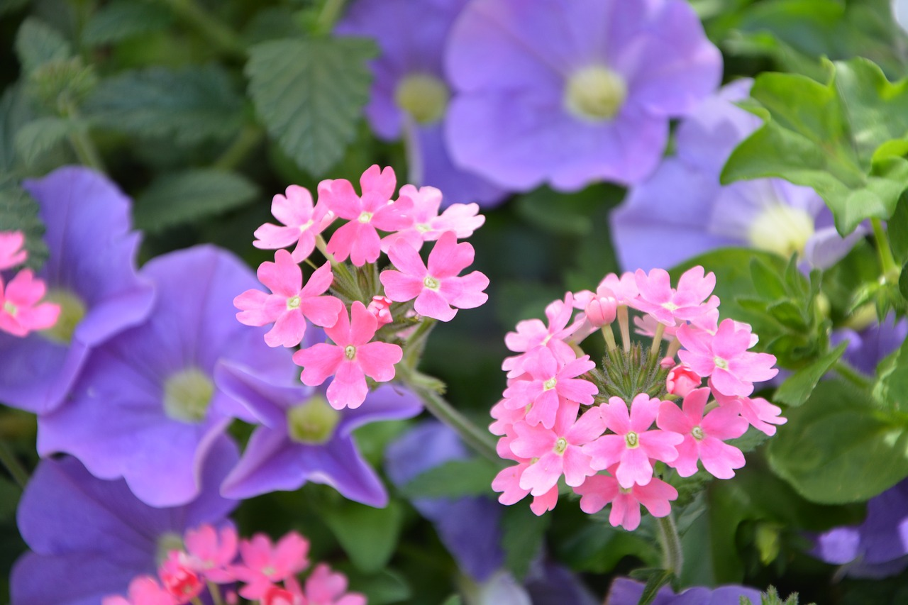 flowers-2664287_1280